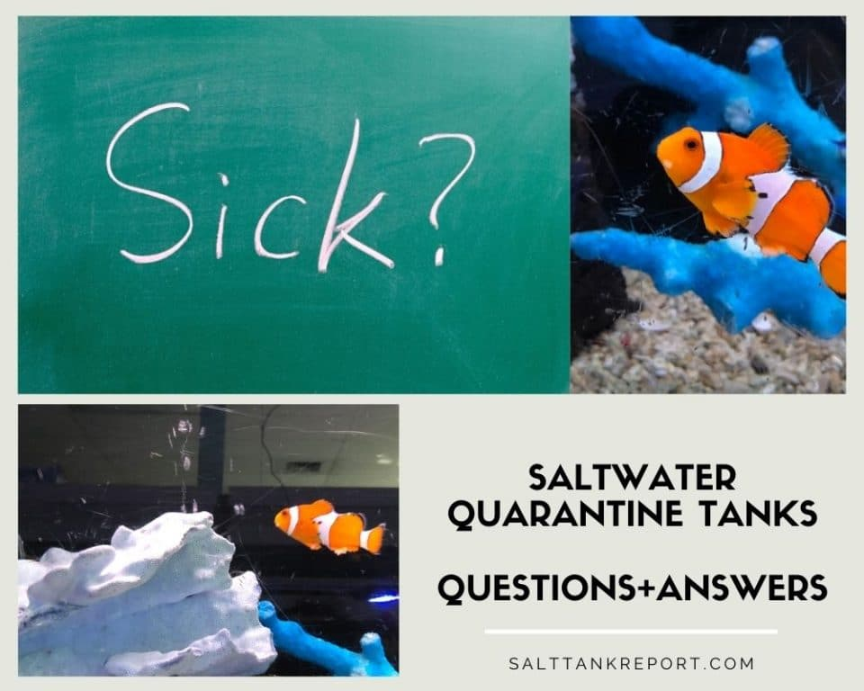 saltwater quarantine tanks