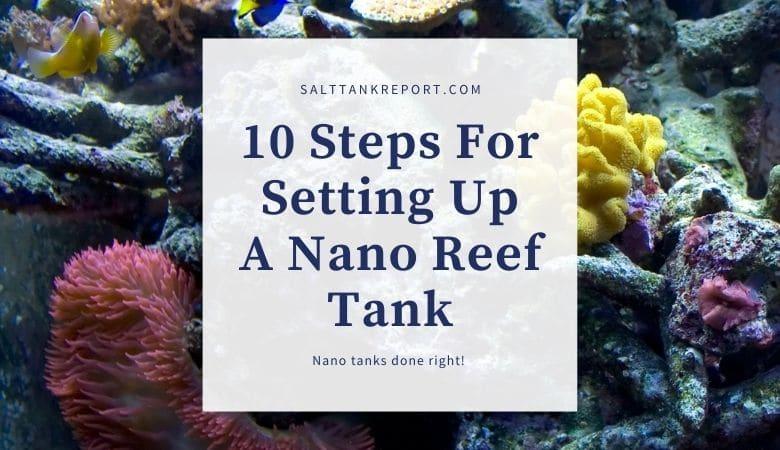 setting up a nano reef tank