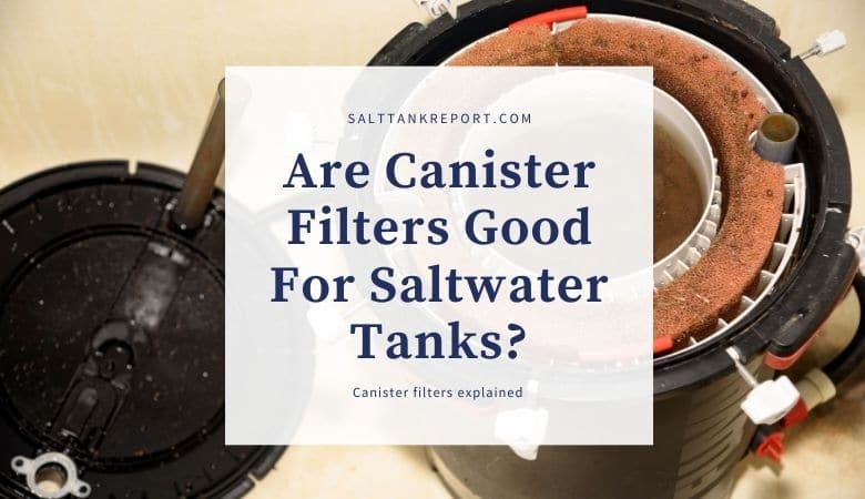 are canister filters good for saltwater tanks