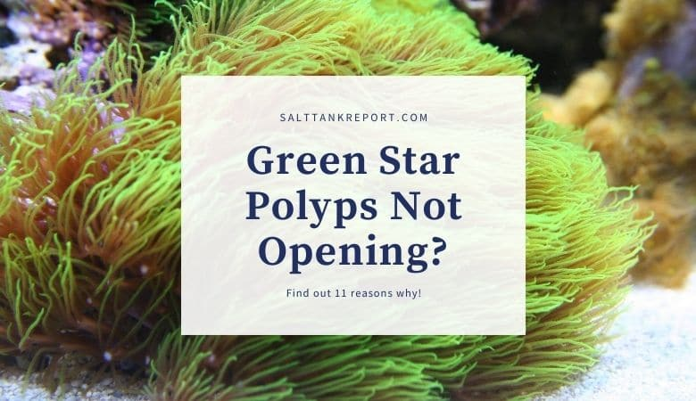 green star polyps not opening