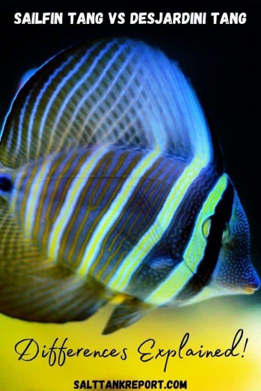 sailfin tang vs desjardini tang