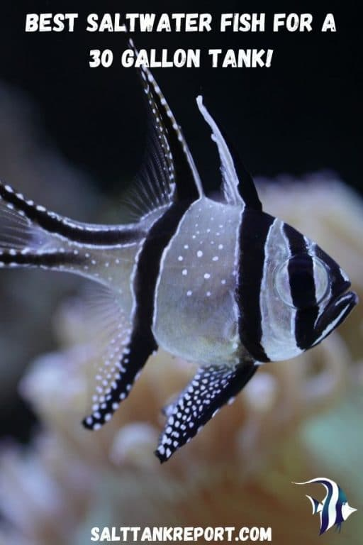 best saltwater fish for a 30 gallon tank