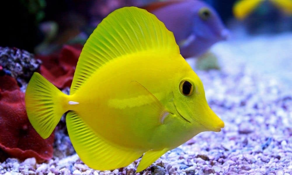 6 Best saltwater Fish For A 100 Gallon Tank 2