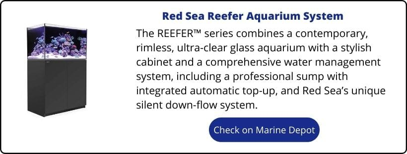are red sea reefers worth it