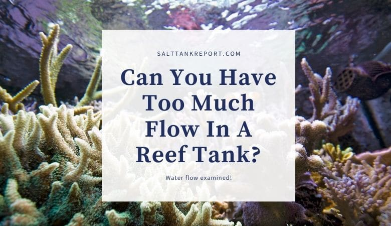 can you have too much flow in a reef tank?