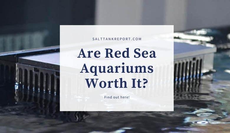 are red sea aquariums worth it