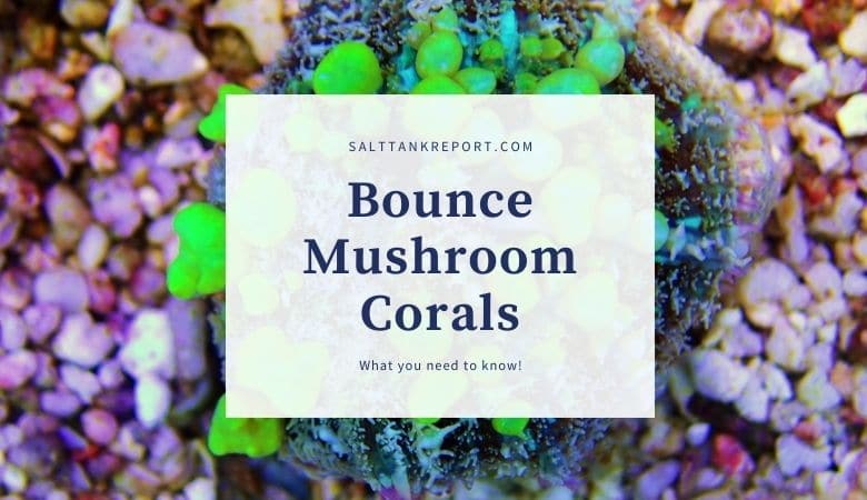 bounce mushroom corals