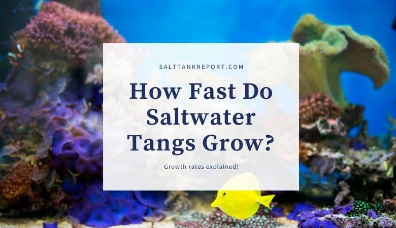 how fast do saltwater tangs grow