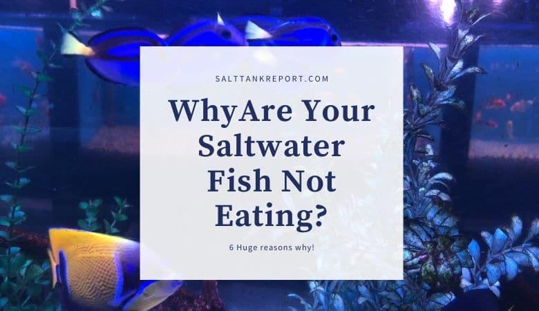 saltwater fish not eating