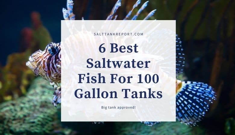 best saltwater fish for 100 gallon