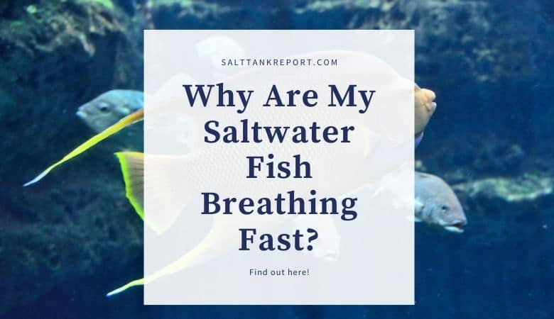 why are my saltwater fish breathing fast