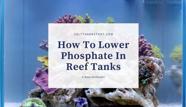 how to lower phosphates in reef tank