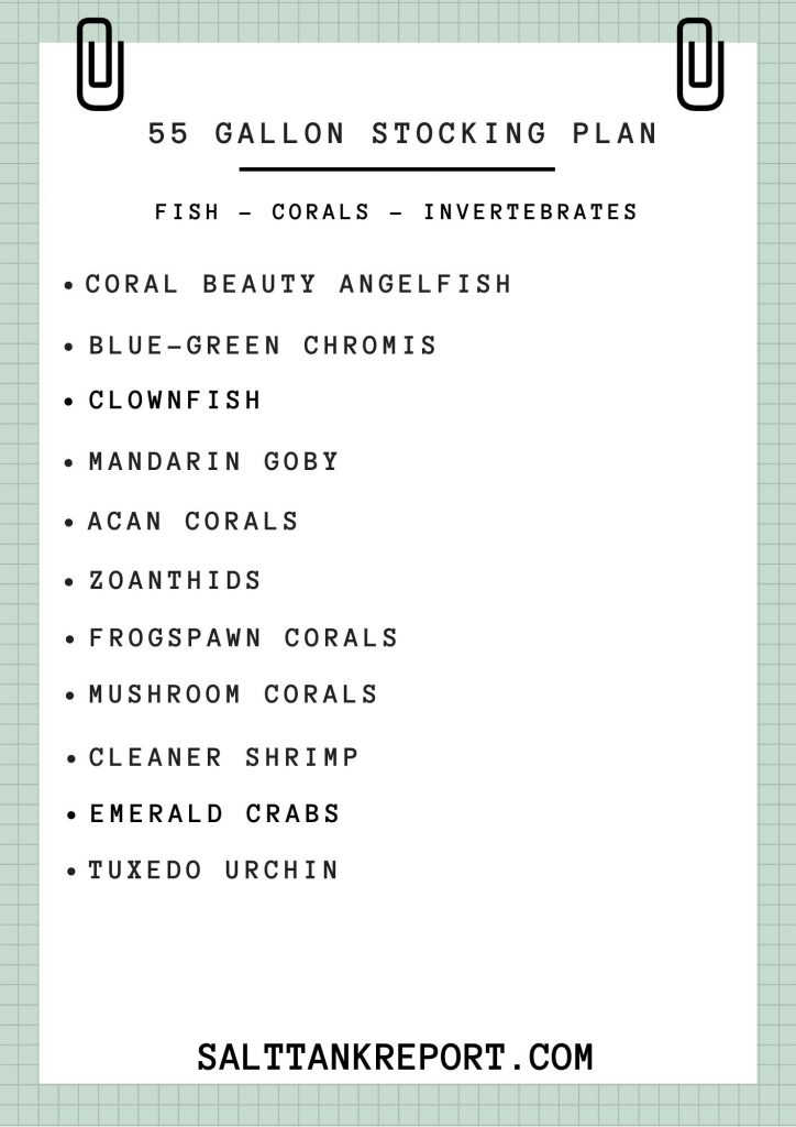 55 gallon saltwater tank stocking plan