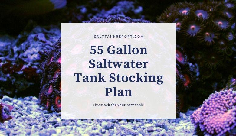 55 gallon tank stocking plan
